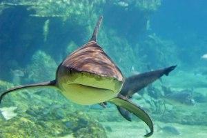 sharkseat1